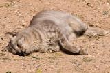Poor dead cat next to the road.