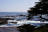 The ocean with a tree_MG_5426.jpg