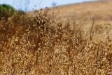 Dry grass, dry hill_MG_0452.jpg