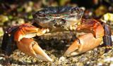 What a crab! .jpg