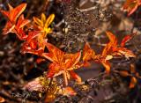 Natural color _MG_4248.jpg