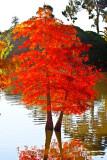 Fire Trees  _MG_2555.jpg