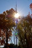 Sun ray tree _MG_2792.jpg