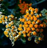Tiny flowers_MG_4104.jpg