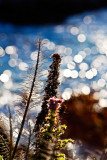 Plants in front of a sparkling sea _MG_4678.jpg