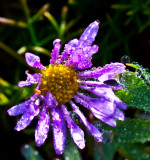 Tiny flower _MG_7253.jpg