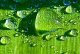 Water drops in green _MG_7207.jpg