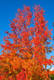 Orange and Blue _MG_2717.jpg