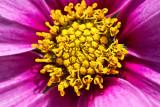 Yellow center  _MG_7240.jpg