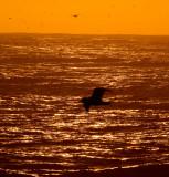 Sunset flying _MG_5930.jpg