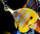 Bright fish_MG_1655.jpg