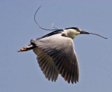 Feathering the nest_MG_4198.jpg
