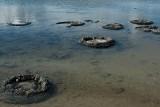 Stromatolites in Lake Thetis