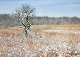 Standing Alone (Winter)