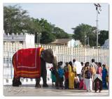 Elephant blessing.....