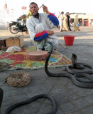 Snake Charmer III