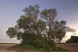 TREE, 20 Sec. Exposure