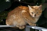 New Kitten on my porch