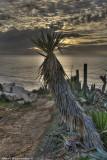 Cactus on Sunset
