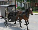 Amish 9