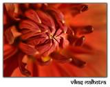 Flower 92