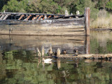 Barge, with ducks