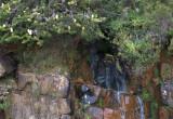 Beside the Pinnacle Road