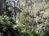 King River Gorge — 1