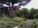 Walking track on The Nut