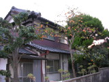 Typical home in Nara, and a persimmon tree - they LOVE persimmons there, I have no idea why.