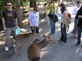 Nara is FAMOUS for its deer.  They're EVERYWHERE in this big park and around the temple, and vendors sell cookies to feed them.