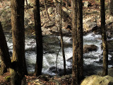 river-and-tree-2.jpg