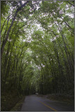 Man-made Forest 1