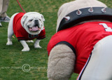 Uga and Hairy Dog have a pre-game standoff