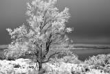 Almost Winter - Mono Lake