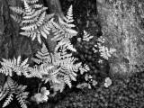 Fern on Granite