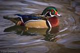 Duck, Denver Zoo