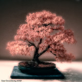 Bonsai Fantasy #6