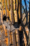 Cactus Detail #1