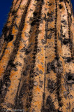 Cactus Detail #3