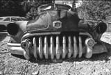Dead 1950 Buick - Early 80's, Ward, CO
