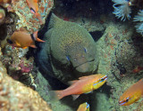 Eels and morays