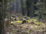 Slitere National Park, Undzavas liekna