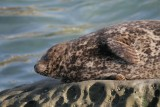 Seal (º£±ª)