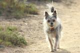 IMG_6171 dogs.jpg