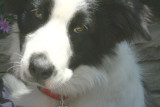 IMG_7680 dogs.jpg