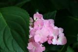 Flowers taken at various times