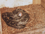 Egg2 P5082853.jpg