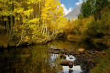 5149-Aspens-on-the-Rivers-edge.jpg