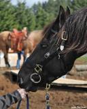 Bolender Horse Park, Feb 2010 Clinic